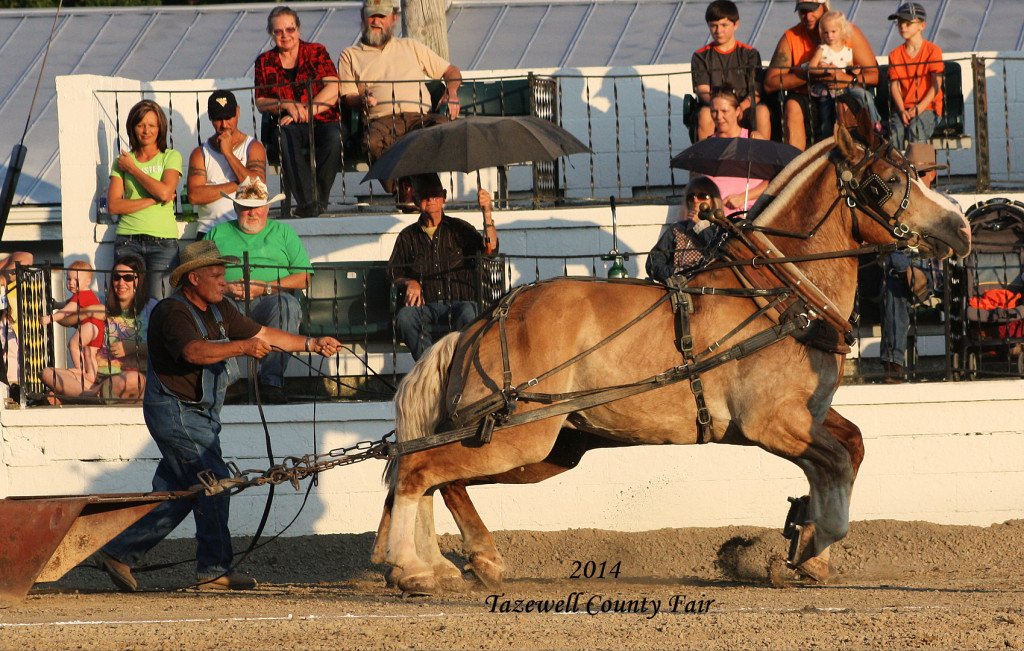Tazewell County Fair 2015